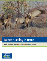 Report cover page for wildlife corridor report